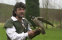 Stag falconry